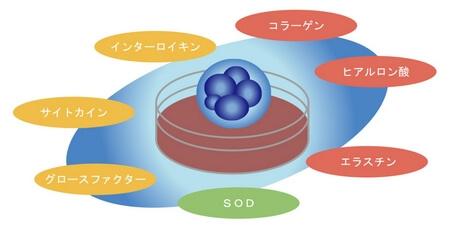 ヒト幹細胞培養液の成分